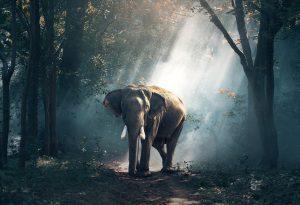 Statue éléphant