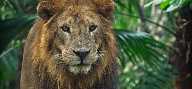 tableau lion deco